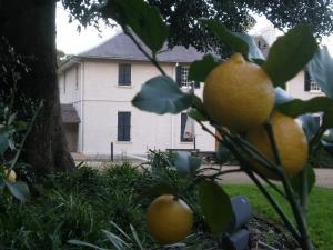 view of Old Government House with lemon tree in foreground